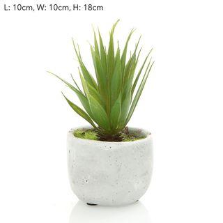 Succulent Spikey 18cm  Green