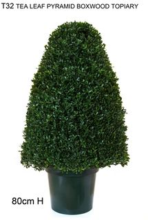 Tea-Leaf Topiary 80cm - Green