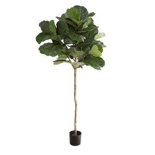 1.5m Fiddle Leaf Tree w/61 Lvs