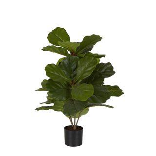 65cm Fiddle Leaf Fig Potted Plant w/36