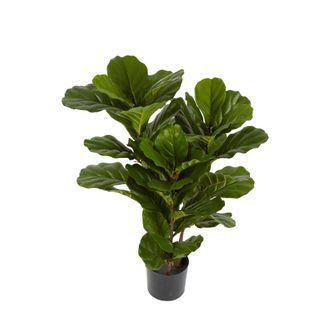 93cm Fiddle Leaf Tree x 3 w/45 Lvs