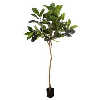 1.83m Rubber Plant Tree w/109 Lvs