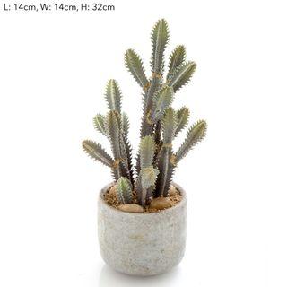 Desert Cactus Small 32cm