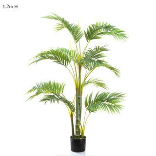 Areca Palm Multi Trunk 1.2m