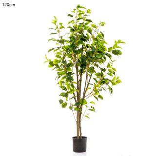 Ficus Tree Potted 1.2m 519 Lvs