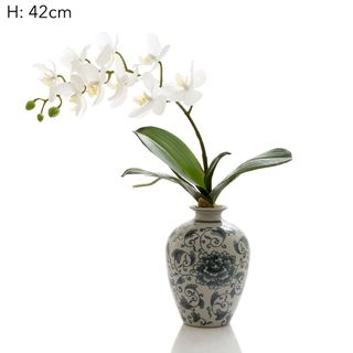 Orchid White in Blue And White Vase