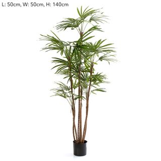 1.2m Honey Lady Palm x7 432 Lvs
