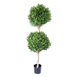Boxwood Double Ball Tree 1.1m (re B35)