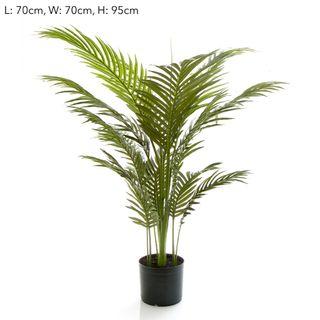 Palm Paradise in Pot 1m