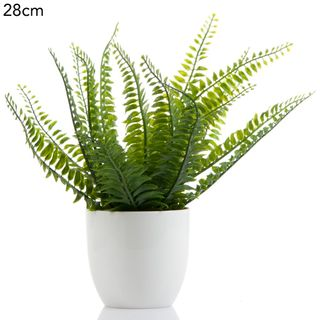 Boston Fern in White Pot