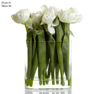 Tulip in Water in Vase White
