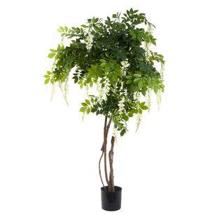 Wisteria Tree 1.9m - White