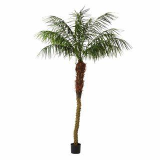 Phoenix Palm 2.4m