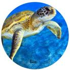 MAGNET SEA TURTLE 50MM