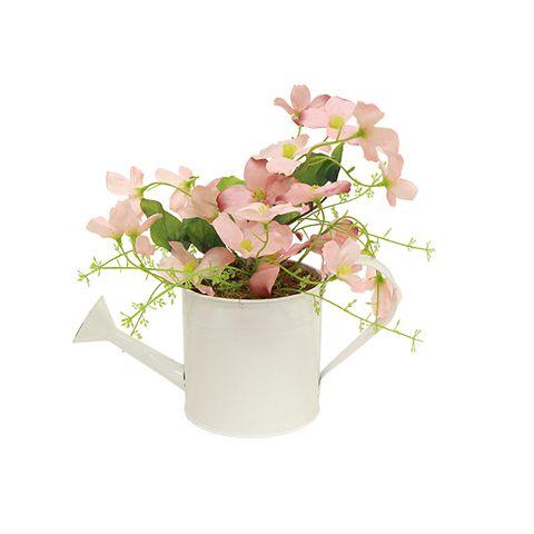 Potted Pink Pansies