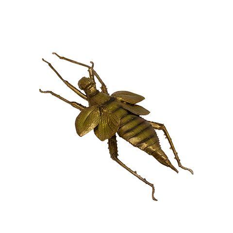 Decorative Gold Locust