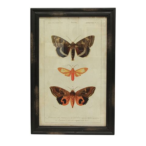 Butterfly Wall Art B