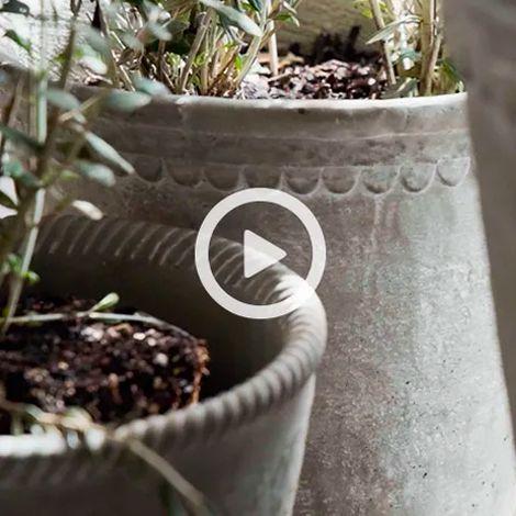 Garden Oasis | Video