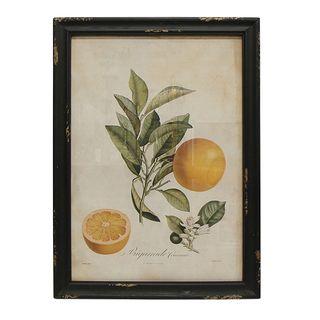 Botanical Grapefruit Wall Art