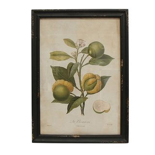 Botanical Fig Wall Art