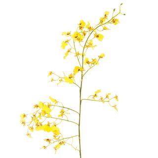 Dancing Orchid 93cm Yellow