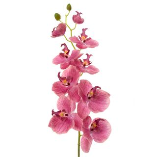 Orchid Phalaenopsis Spray 74cm Pink
