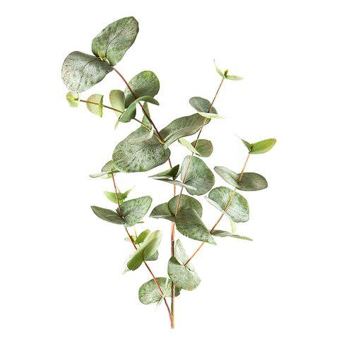 Eucalyptus Spray Mixed Sized Leaves 87cm