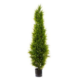 Cypress Pine 1.8m