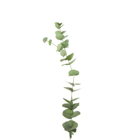 Eucalyptus Stem 100cm Green