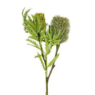 Banksia Spray with Bud & Leaf 80cm Green