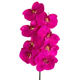 Orchid Phalaenopsis Spray 1m Mauve