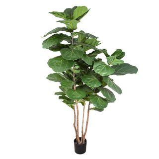 Fiddle Leaf Tree 1.9m