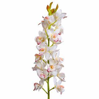 Orchid Cymbidium 80cm Cream