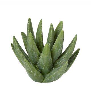 Cactus Small Green