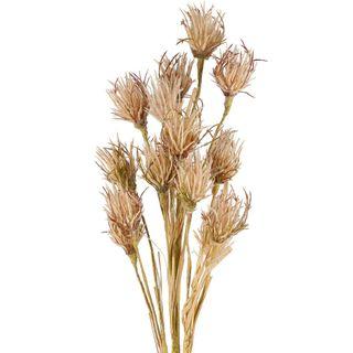 Wheat Flower Stem 75cm Brown
