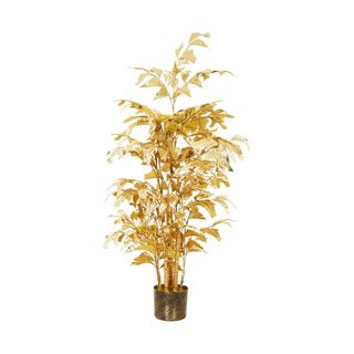 Fish Tail Palm Potted Gold