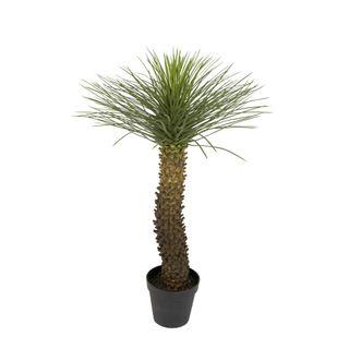 Hedgehog Grass Tree In Pot 1.12m