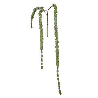 Amaranthus Hanging Spray 1.45m Green