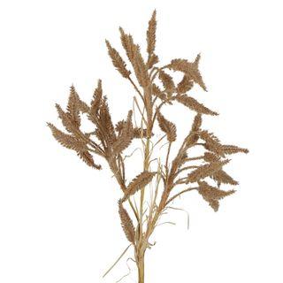 Dried Look Wheat Grass Stem 63cm Brown
