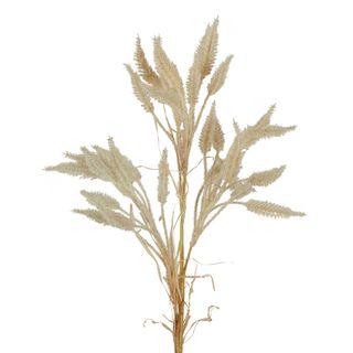 Dried Look Wheat Grass Stem 63cm Cream