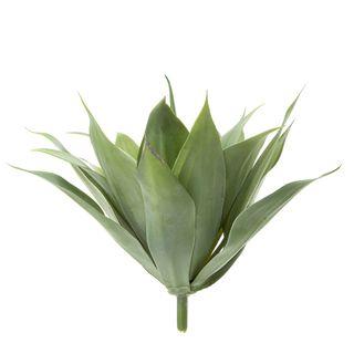 Agave Bush 41cm W/19 Leaves Green