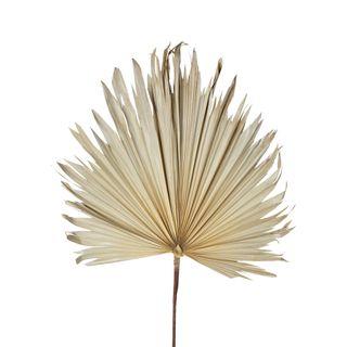 Preserved Palm Leaf Cream Large