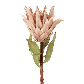 Dried Look Protea Stem 75cm Blush