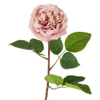 Dried English Rose Stem 50cm Pink