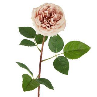 Dried English Rose Stem 50cm Nude