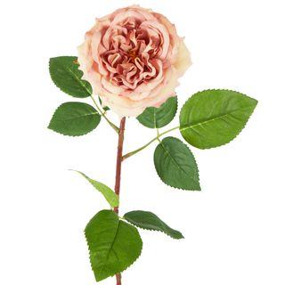 Dried English Rose Stem 50cm Blush