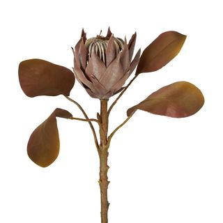 Dried Look Protea Stem Small 53cm Brown