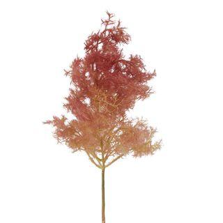 Smoke Tree Stem Burgandy Small