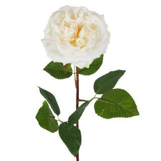Dried English Rose Stem Cream
