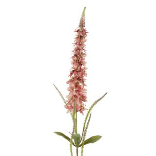 Veronica Speedwell Flower Stem Pink